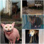 Animais podem ser salvos de maus-tratos sem mandado judicial