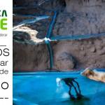 Catraca Livre publica em defesa dos animais explorados em zoológicos