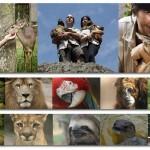 Santuário de animais inicia uma das mais urgentes campanhas do país: Faça sua parte!