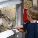 Outra Universidade cancela atrações com Zoológico na Inglaterra