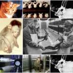 Pode a experimentação animal ser considerada ética?