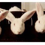Sobre a Audiência que tratou dos testes cosméticos em animais