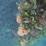 Turismo irresponsável ameaça biodiversidade em recifes