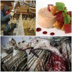 São Paulo proíbe Foie gras e alguns produtos de peles de animais