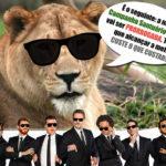 Com apoio do CQC, santuário busca salvar animais abusados por circos e zoológicos