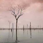 Hidrelétrica provoca extinção de animais na Amazônia