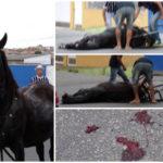Égua cai de cansaço ao puxar carroça em Taubaté (SP)