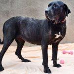 ONG luta para adoção de cães idosos em São José dos Campos