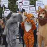 Protesto em Londres quer banir circos com animais