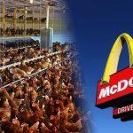 """McDonald's usará apenas ovos """"cage-free"""" nos Estados Unidos"""