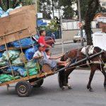 Curitiba (PR) está oficialmente com as carroças proibidas