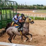 O sofrimento dos cavalos usados na tração e em corridas