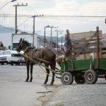 Primeira etapa vitoriosa contra a exploração dos cavalos em Curitiba (PR)