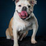 Cachorros velhinhos ganham fotografia para estimular a adoção