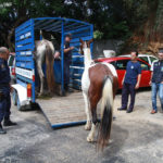 Cavalos são salvos da exploração de charretes em Petrópolis (RJ)