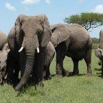 Peso de elefante influencia menos do que boi, diz representante de Santuário