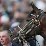 Estabilizando a dor dos choques nos cavalos