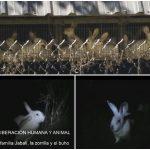 Ativistas da ALF libertam 20 coelhos em fazenda na Espanha