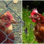 Vegetarianismo e protovegetarianismo: definições e concepções