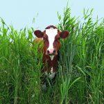 Sobre os Protovegetarianos