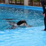 Animais no SeaWorld agridem uns aos outros por estresse
