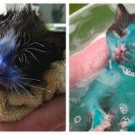 Crueldade: gatinhos são pintados com tinta permanente na Inglaterra