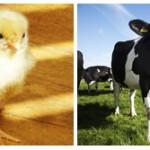 Introdução aos Direitos Animais: do Grupo de Oxford a Alasdair Cochrane