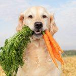 COMPATA vai participar de bate-papo sobre alimentação canina