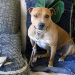 Cachorro é enterrado vivo em Minas Gerais