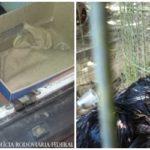 Homens são detidos com galos escravizados em rinhas em Jacareí (SP)