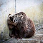 """Zoológicos matam animais """"excedentes"""" que não dão lucro"""