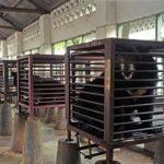 Ursos escravizados em fazenda de bile são salvos por santuário