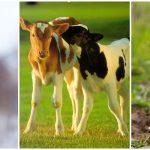 Por que devemos parar de usar couro e outras peles de animais?