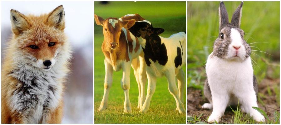 por-que-devemos-parar-de-usar-couro-e-outras-peles-de-animais-veganismo-vegetarianismo-especismo-marcas-veganas-sem-couro-sem-pele-moda