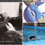 Tilikum é morta em SeaWorld após 34 anos de confinamento