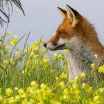 EUA matam 3,2 milhões de animais na natureza para Pecuária