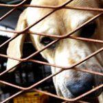 Taiwan é o primeiro país asiático a proibir consumo de cães e gatos