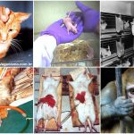 Testes em animais: ruim e desnecessário